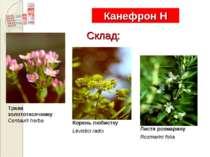 Канефрон Н Склад: