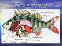 Внутрішня будова риб