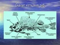 Скелет кісткових риб