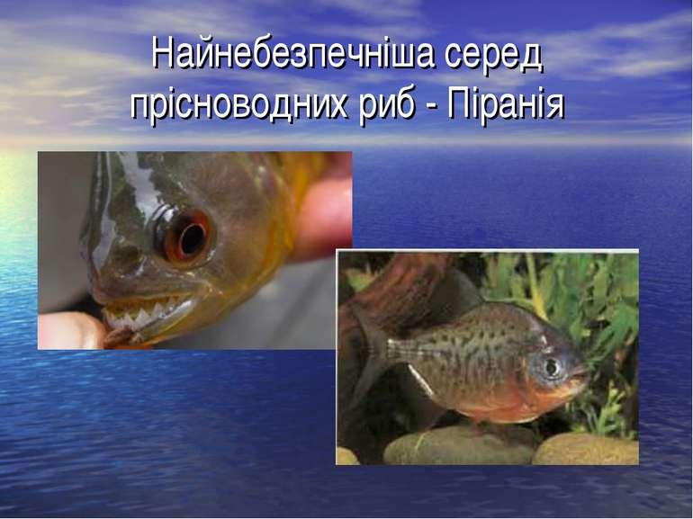 Найнебезпечніша серед прісноводних риб - Піранія