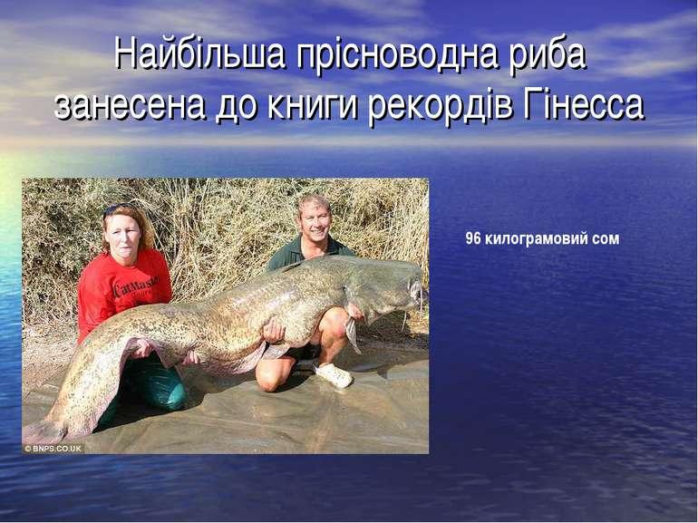 Найбільша прісноводна риба занесена до книги рекордів Гінесса 96 килограмовий...