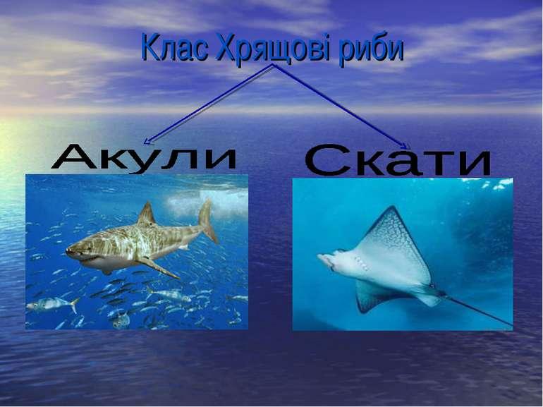 Клас Хрящові риби