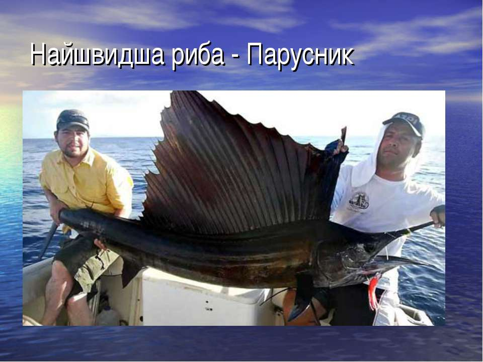 Найшвидша риба - Парусник