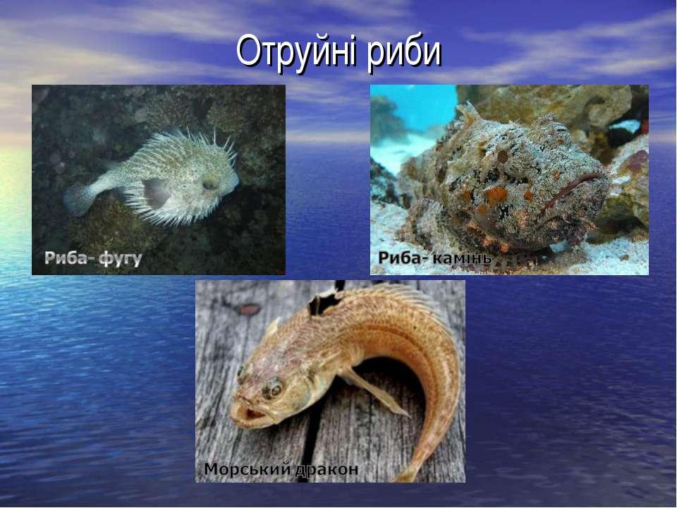 Отруйні риби