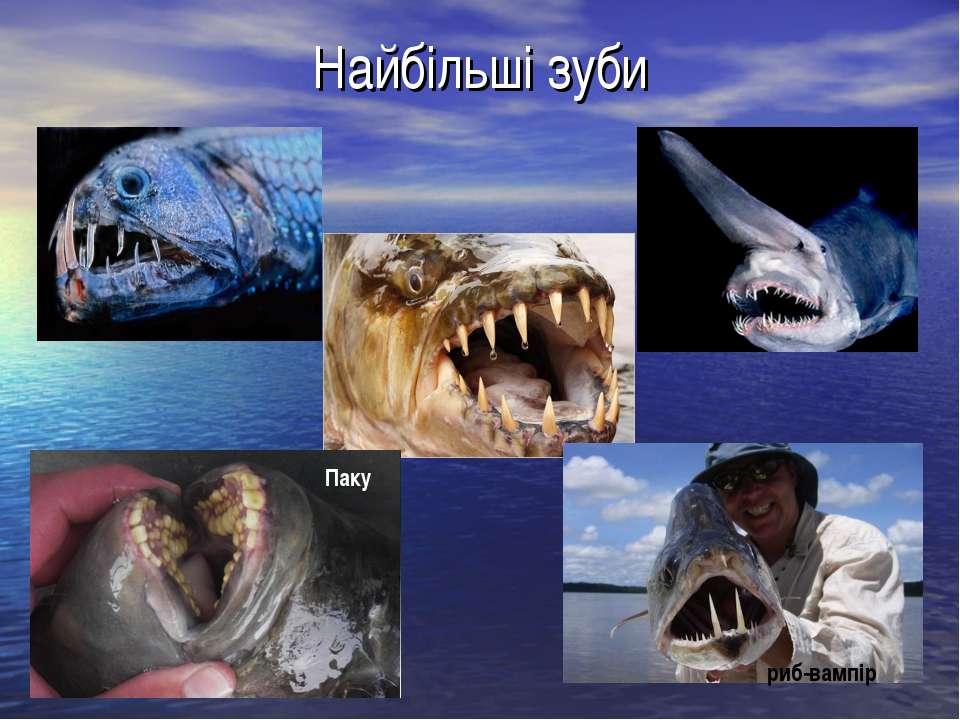 Найбільші зуби риб-вампір Паку