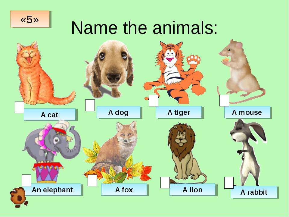 Name the animals: A cat A dog A tiger A mouse An elephant A fox A lion A rabb...