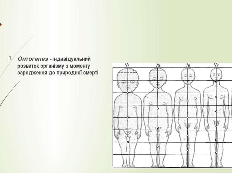 Онтогенез - індивідуальний розвиток організму з моменту зародження до природн...