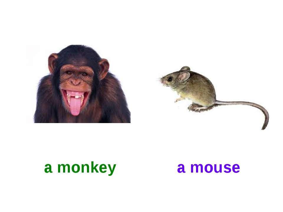 a monkey a mouse
