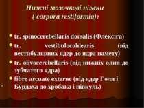 Нижні мозочкові ніжки ( corpora restiformia): tr. spinocerebellaris dorsalis ...