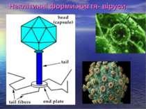 Неклітинні форми життя- віруси
