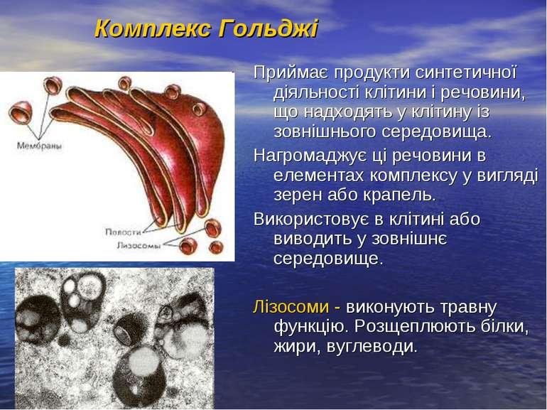 Комплекс Гольджі Приймає продукти синтетичної діяльності клітини і речовини, ...