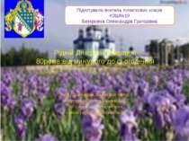 Рідній Дніпропетровщині 80років:від минулого до сьогодення Мій рідний край, з...