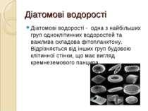 Діатомові водорості Діатомові водорості - одна з найбільших груп одноклітинни...
