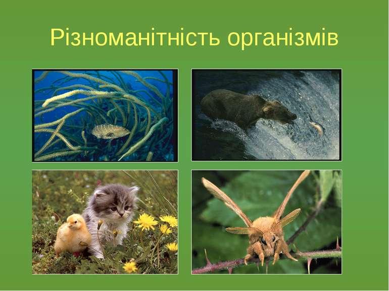 Різноманітність організмів