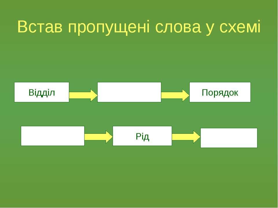 Встав пропущені слова у схемі Відділ Рід Порядок