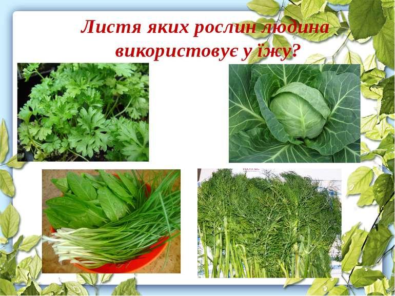 Листя яких рослин людина використовує у їжу?