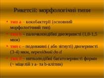 Рикетсії: морфологічні типи тип a – кокобактерії (основний морфологічний тип)...