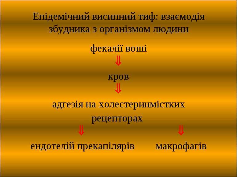Епідемічний висипний тиф: взаємодія збудника з організмом людини фекалії воші...