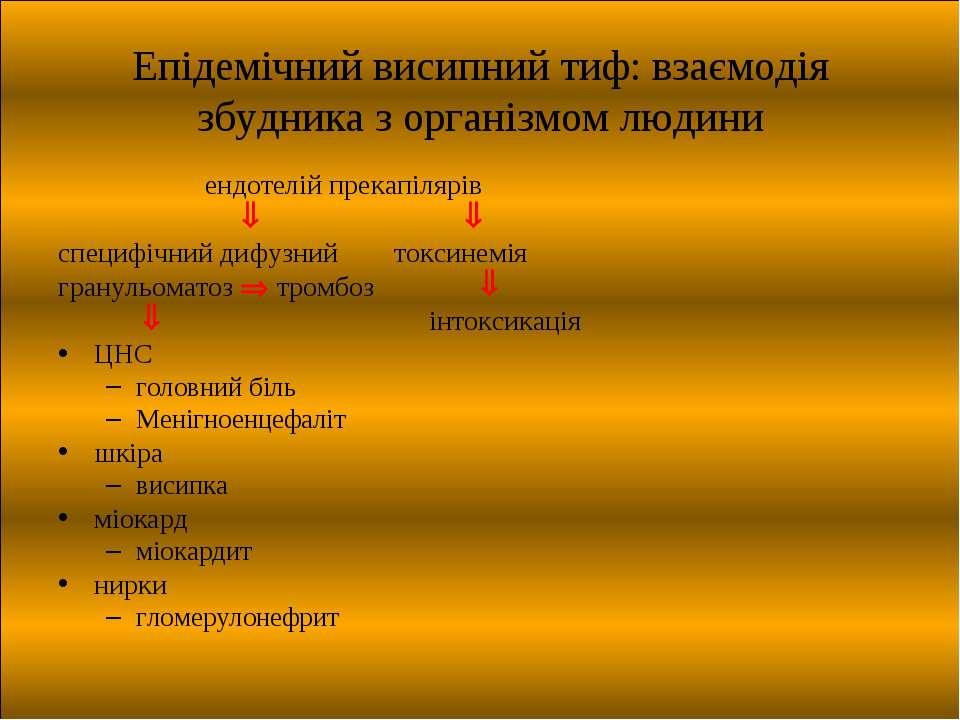 Епідемічний висипний тиф: взаємодія збудника з організмом людини ендотелій пр...
