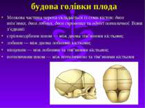 будова голівки плода Мозкова частина черепа складається iз семи кiсток: двох ...