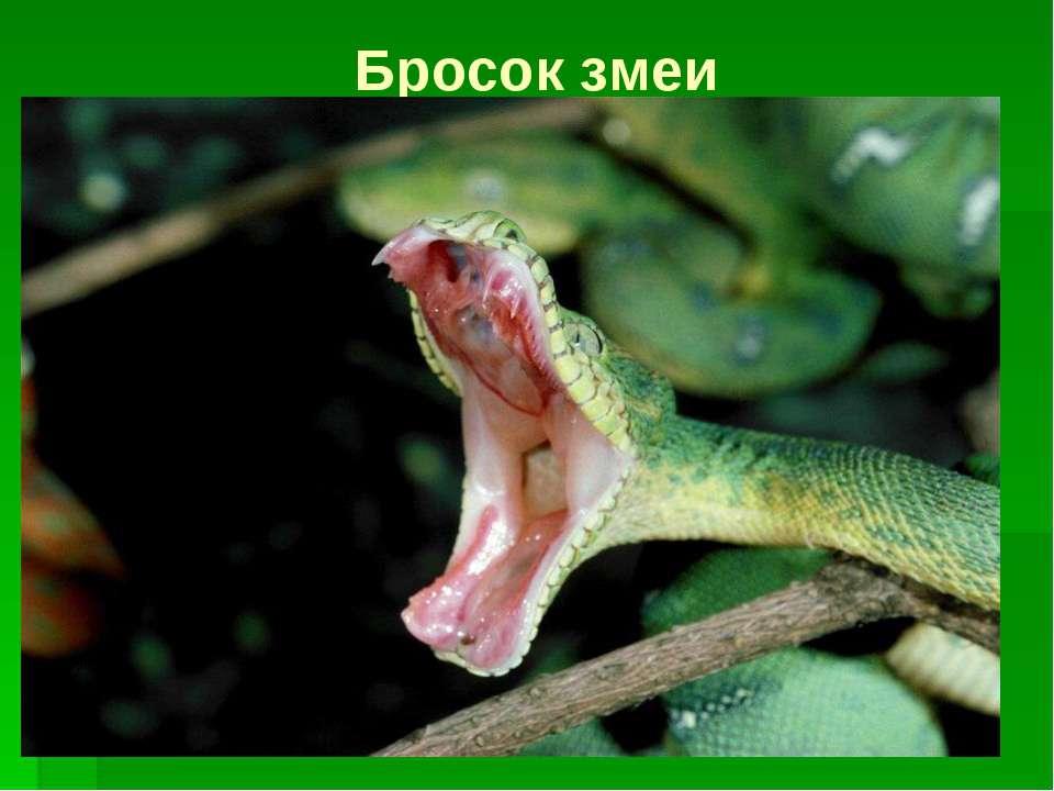 Бросок змеи