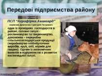 """Передові підприємства району ПСП """"Агрофірма Авангард"""" керівник Демченко Григо..."""
