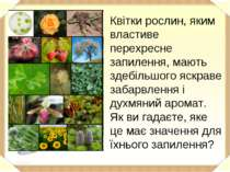Квітки рослин, яким властиве перехресне запилення, мають здебільшого яскраве ...