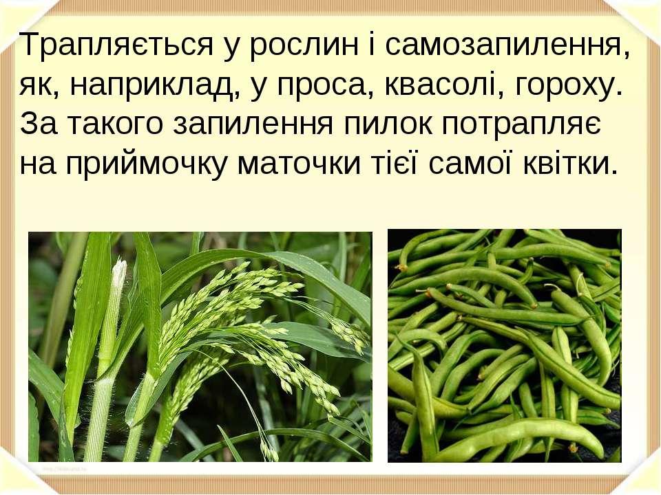 Трапляється у рослин і самозапилення, як, наприклад, у проса, квасолі, гороху...