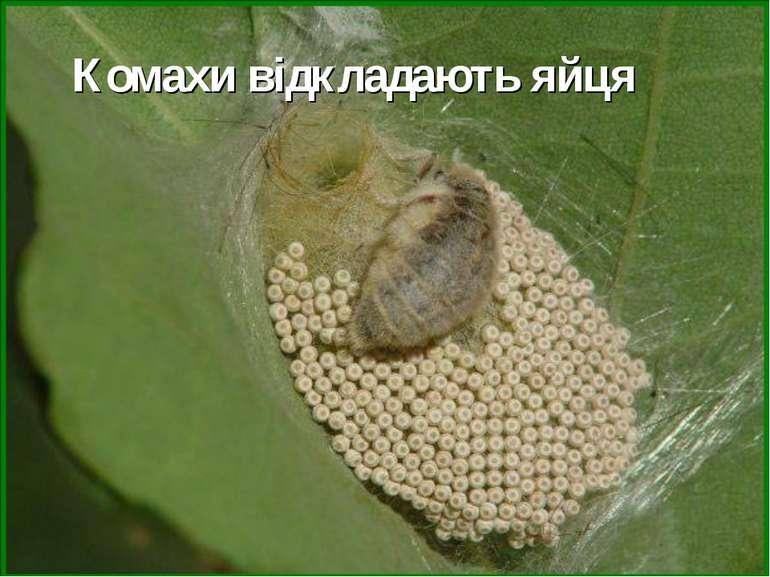 Комахи відкладають яйця