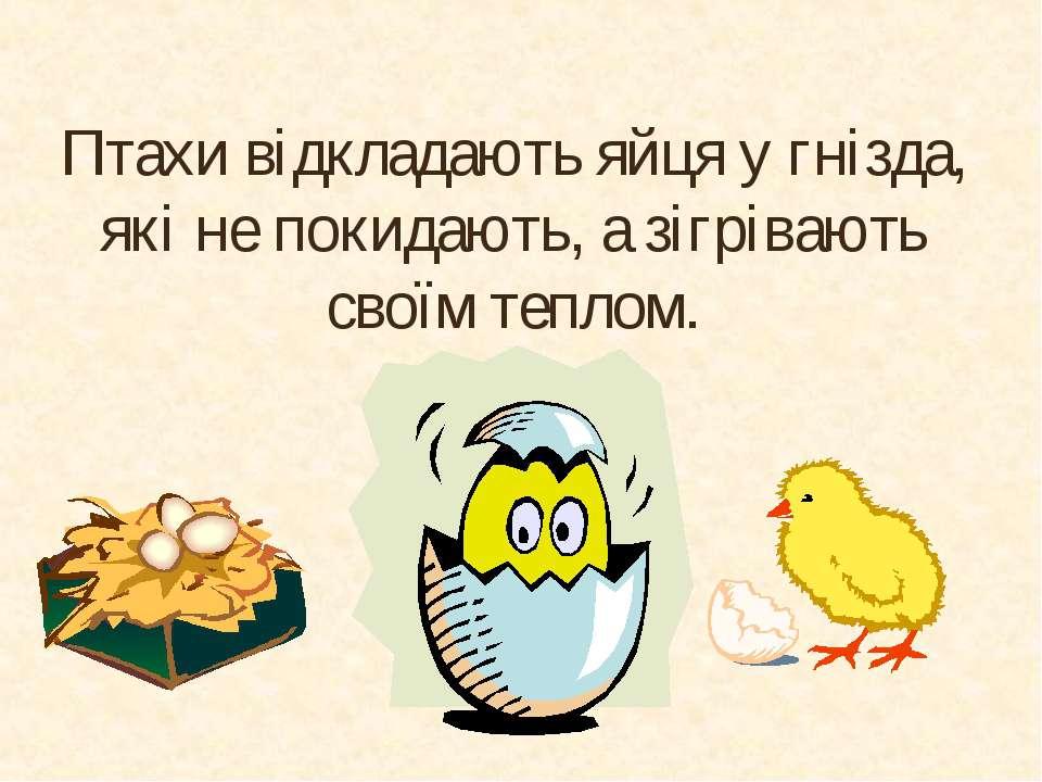 Птахи відкладають яйця у гнізда, які не покидають, а зігрівають своїм теплом.