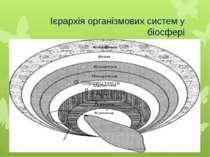 Ієрархія організмових систем у біосфері