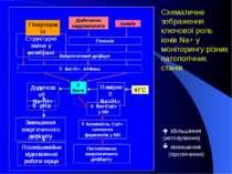 Діабетична кардіоміопатія Ішемія Енергетичний дефіцит Гіпоксія Na+/Ca2+ у МХ ...