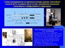 Схема перфузійної системи ізольованого серця за О. Лангендорфом 1. Ізольоване...