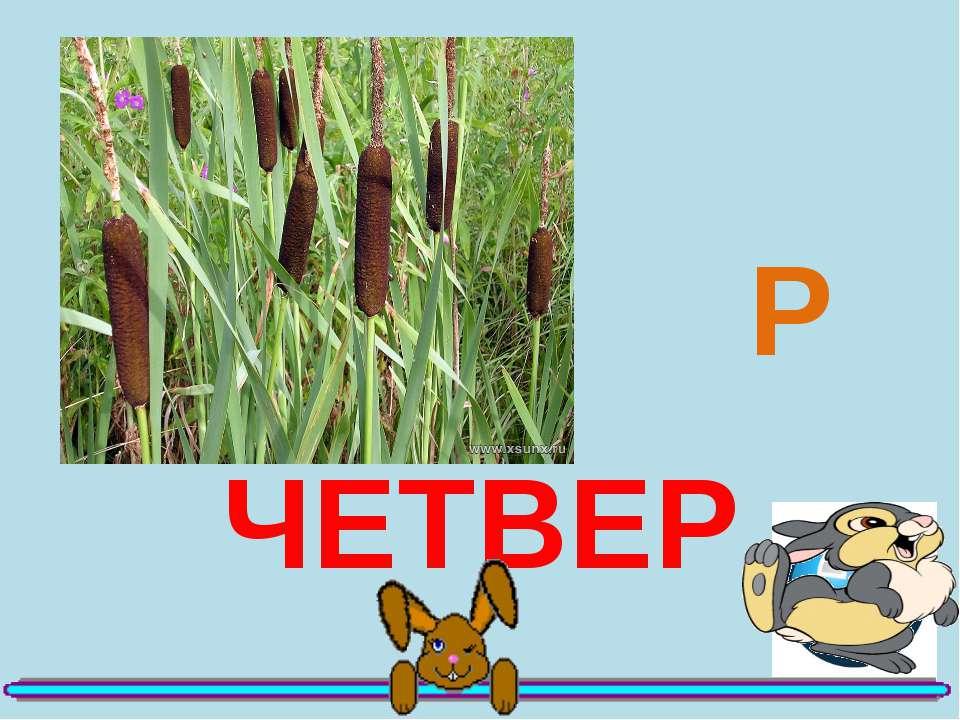236 Е ЧЕТВЕР Р