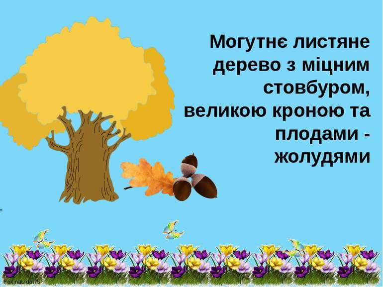 Могутнє листяне дерево з міцним стовбуром, великою кроною та плодами - жолудя...