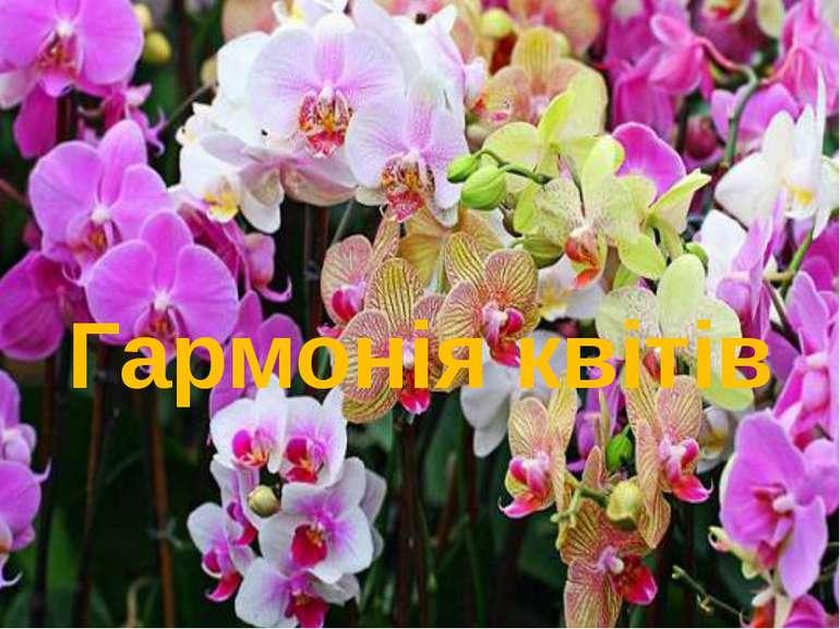Гармонія квітів