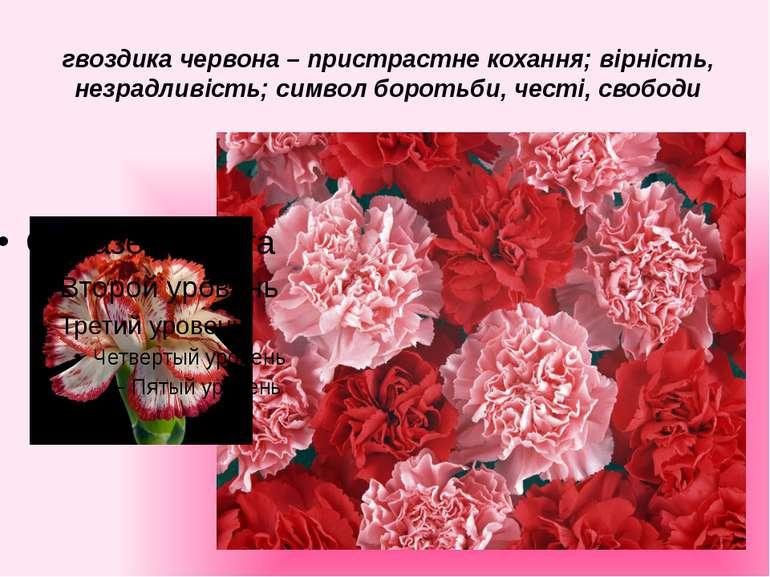 гвоздика червона – пристрастне кохання; вірність, незрадливість; символ борот...