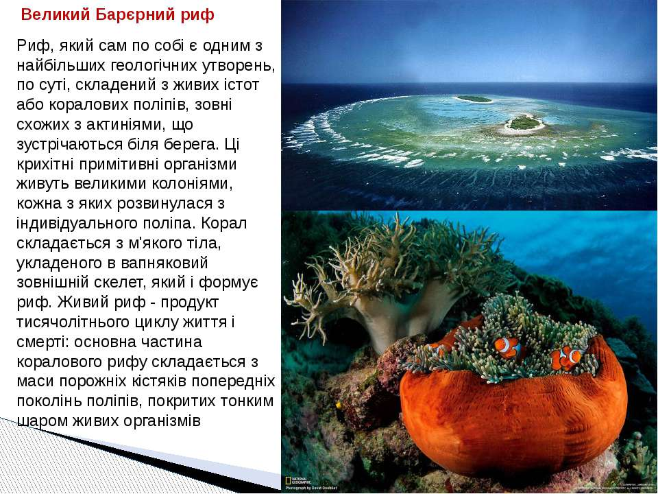 Риф, який сам по собі є одним з найбільших геологічних утворень, по суті, скл...