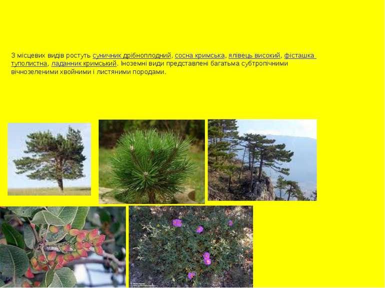 З місцевих видів ростуть суничник дрібноплодний, сосна кримська, ялівець висо...
