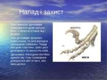 Напад і захист Одні травоїдні динозаври пересувалися дуже швидко. Вони з легк...
