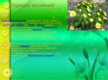 Горицвіт весняний багаторічна рослинависотою 10—40 см. Цвіте в квітні—травн...