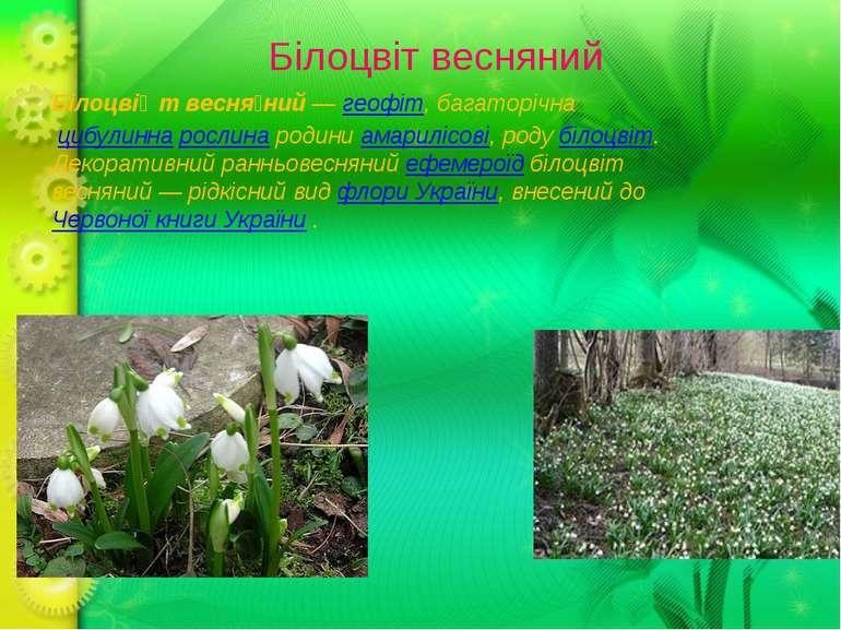 Білоцвіт весняний Білоцві т весня ний—геофіт, багаторічна цибулиннарослин...