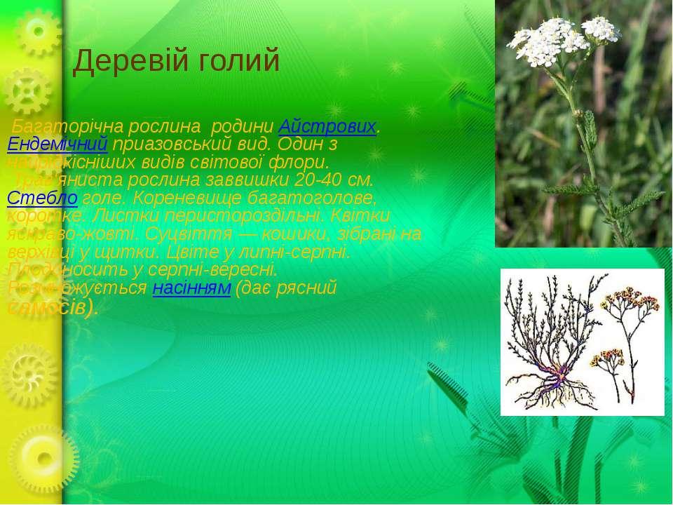 Деревій голий Багаторічна рослина родиниАйстрових.Ендемічнийприазовський ...