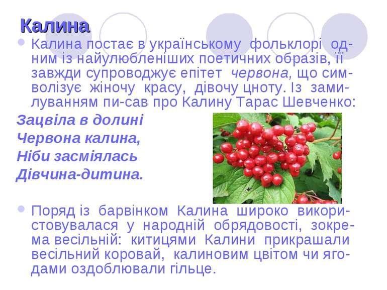 Калина Калина постає в українському фольклорі од-ним із найулюбленіших поетич...