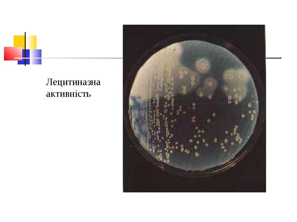 Лецитиназна активність