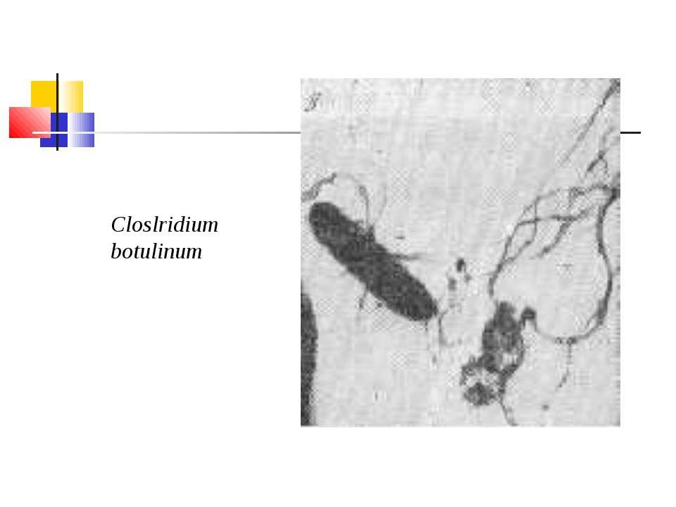 Closlridium botulinum