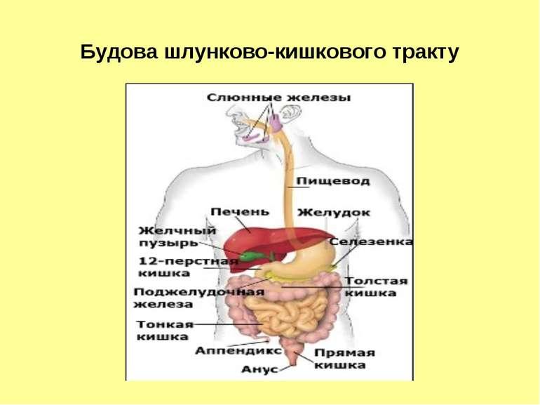 Будова шлунково-кишкового тракту