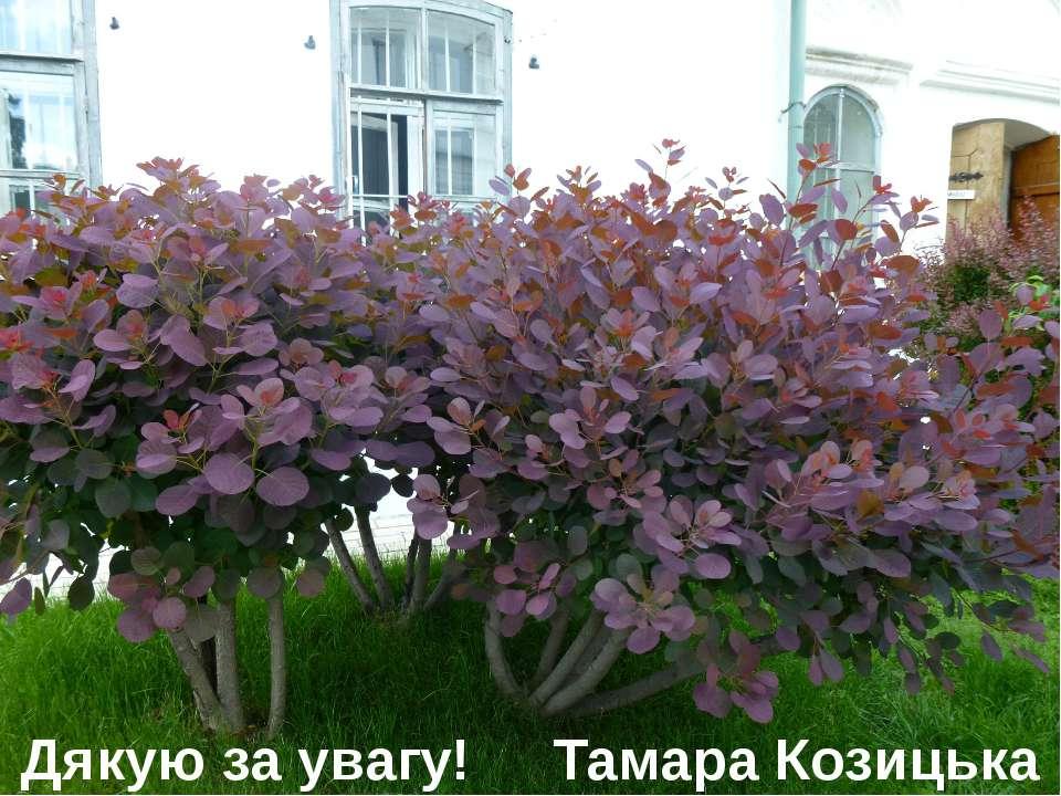 Дякую за увагу! Тамара Козицька