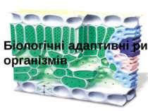 Біологічні адаптивні ритми організмів