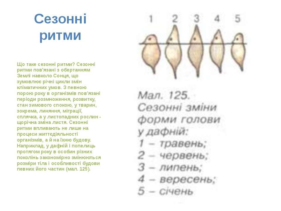 Сезонні ритми Що таке сезонні ритми? Сезонні ритми пов'язані з обертанням Зем...